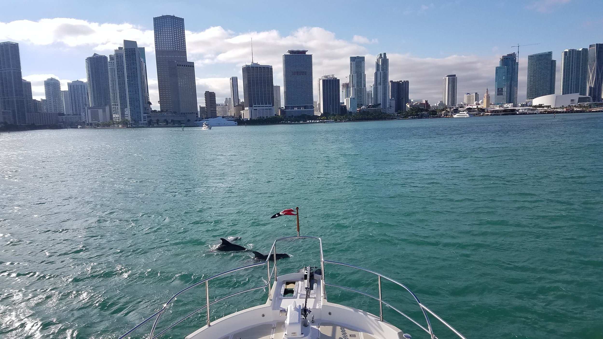 Dolphins welcomed us into the Miami harbor