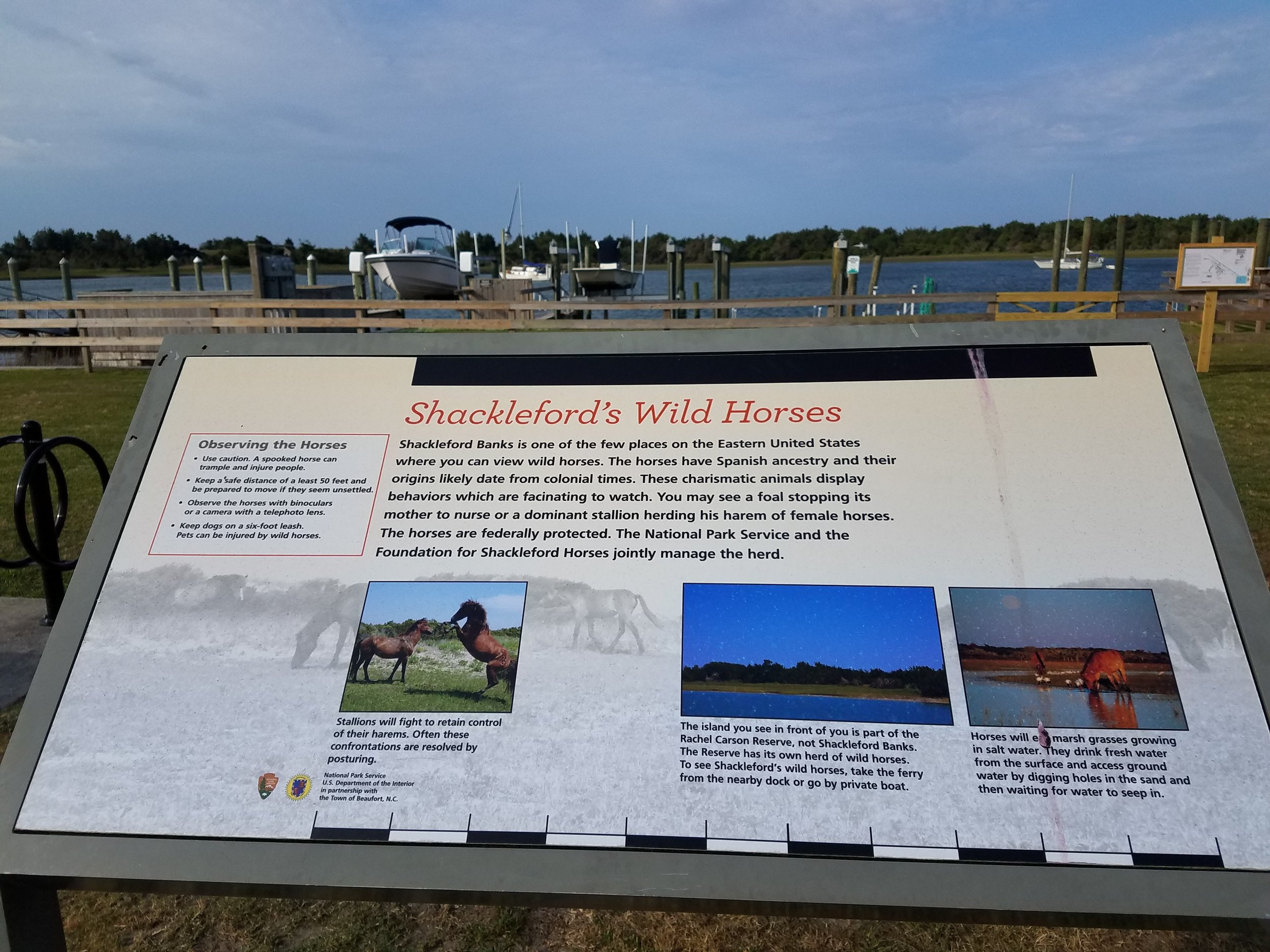 Across the river from Beaufort is Shackleford Island where the Spanish left their horses and the descendants now run free