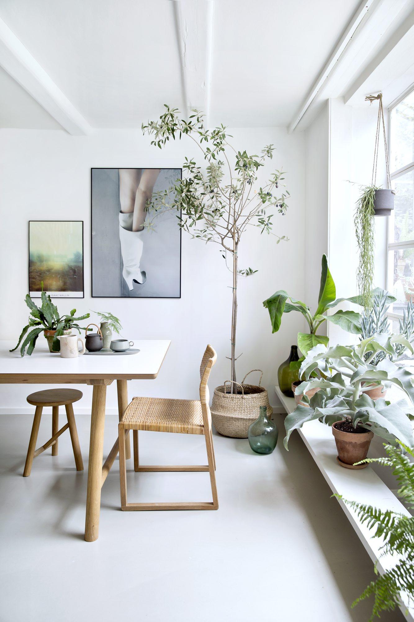 Bomedplanter1-1.jpg