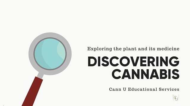 Have you Discovered Cannabis yet? Discovering Cannabis gets you up to speed on the important basics in less than an hour. Watch an intro https://youtu.be/Zk0ARE6LeLU . #cannabis  #onlinelearning  #medicalcannabis  #discoveringcannabis  #cannabiscanada #cannabiseducation