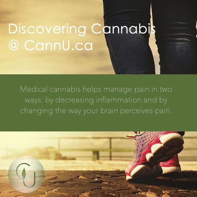 #cannabis #onlinelearning #discoveringcannabis #thc #cbd #cannabinoids #medicalcannabis #cannu #painmanagement