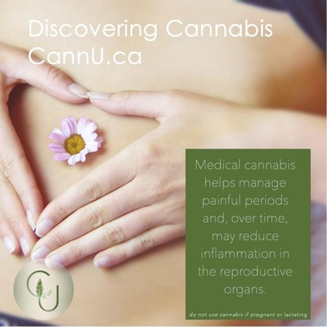 #medicalcannabis helps manage painful periods and, over time, may reduce inflammation in the reproductive organs. 🌱 #discoveringcannabis #onlinelearning #cannu #healthyliving #cannabiseducation #onlinecourses