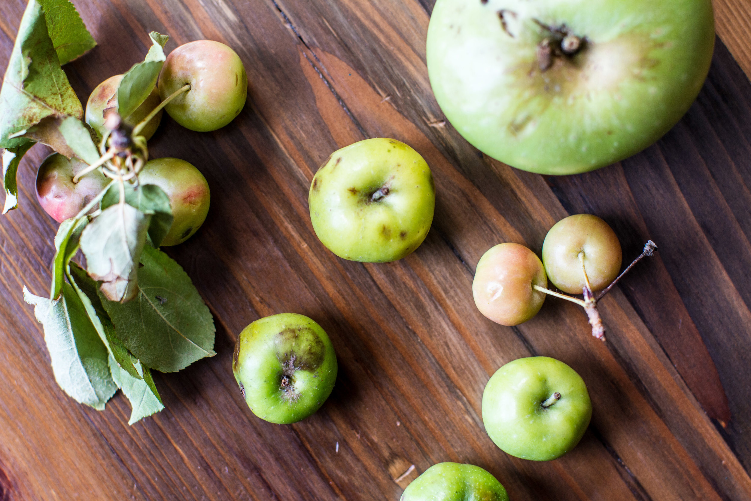 Imperfect apples destined to become ANXO cider. Photo courtesy of ANXO