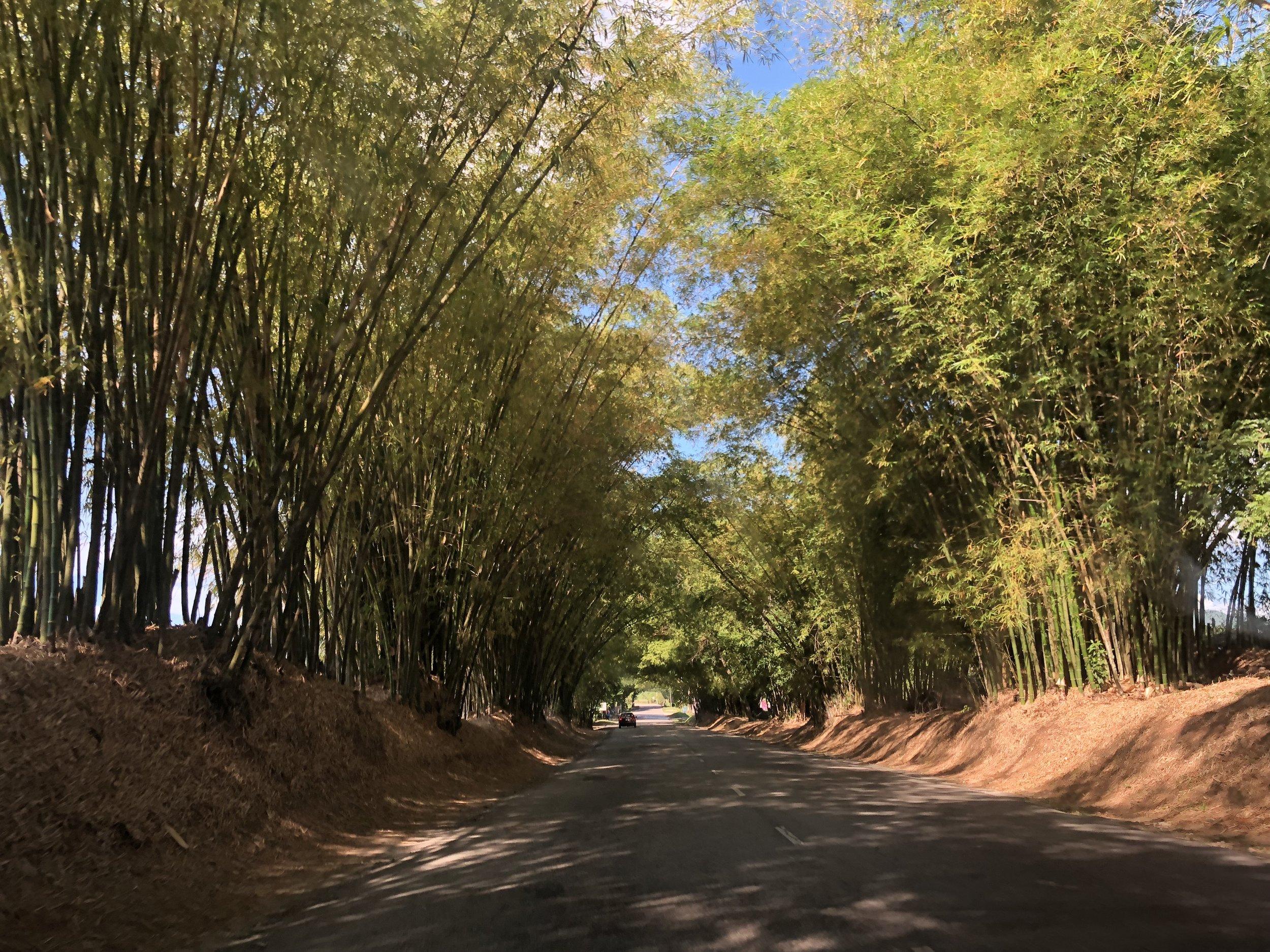 Sugarcane lined streets (JAMAICA, 2018,  ©  JOEL ANG PHOTOGRAPHY)