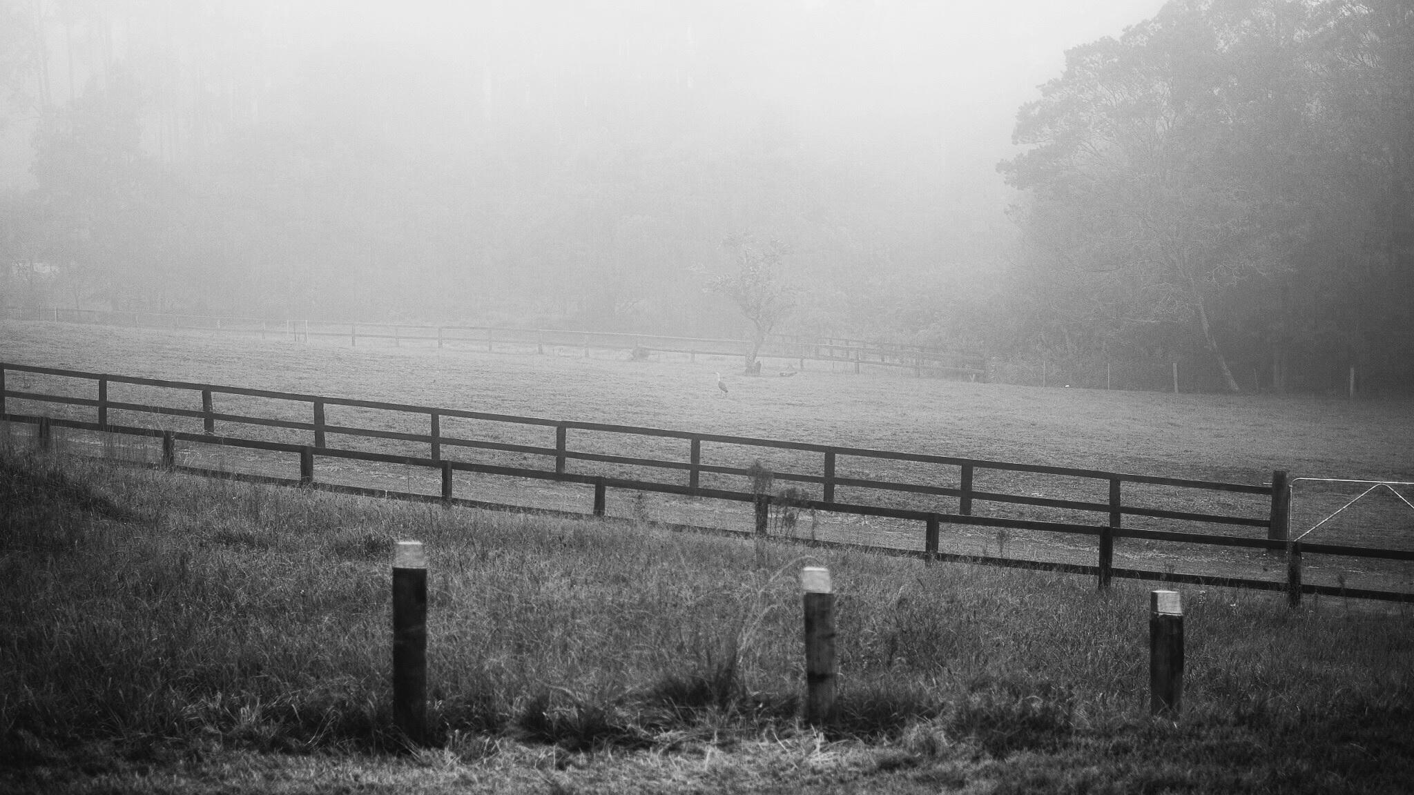 Fog shrouded field