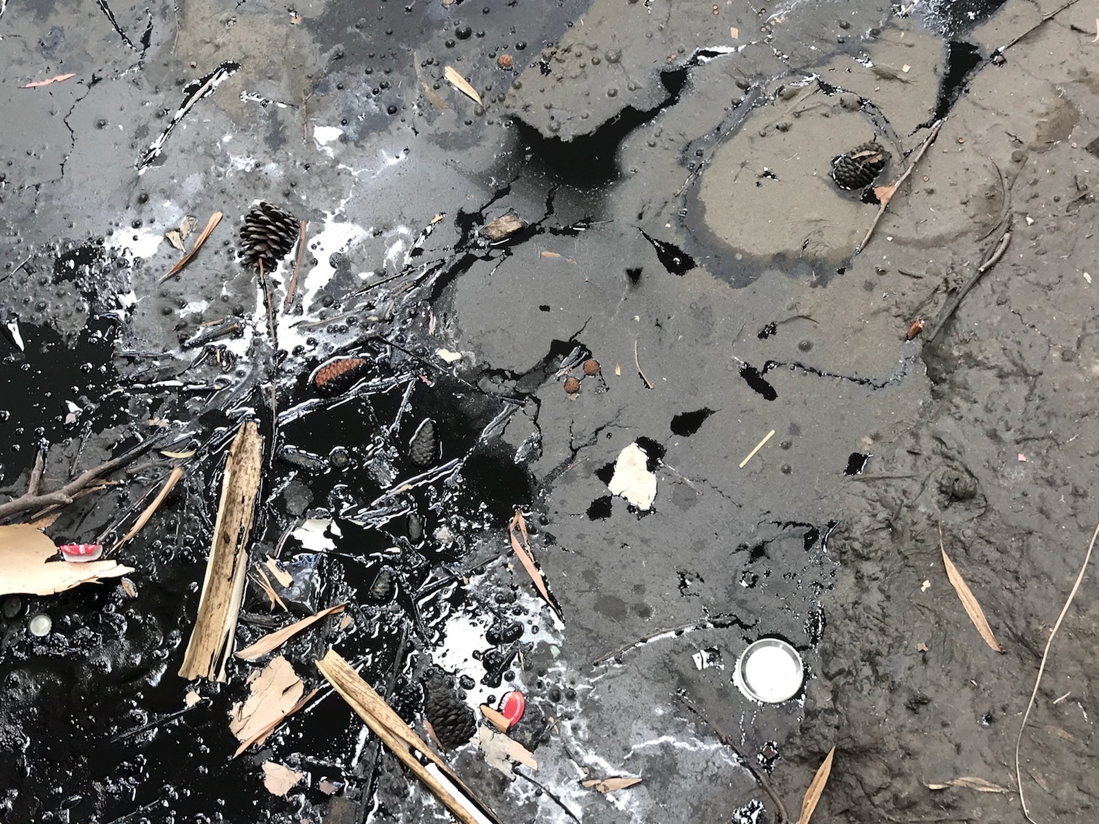 An active tar pit, with a mixture of sticks, pine cones, buttons and plastic bottle caps that have fallen, or been dropped in by visitors to the musuem