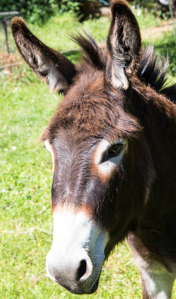 Missy-the-donkey-by-Steven-French.jpg
