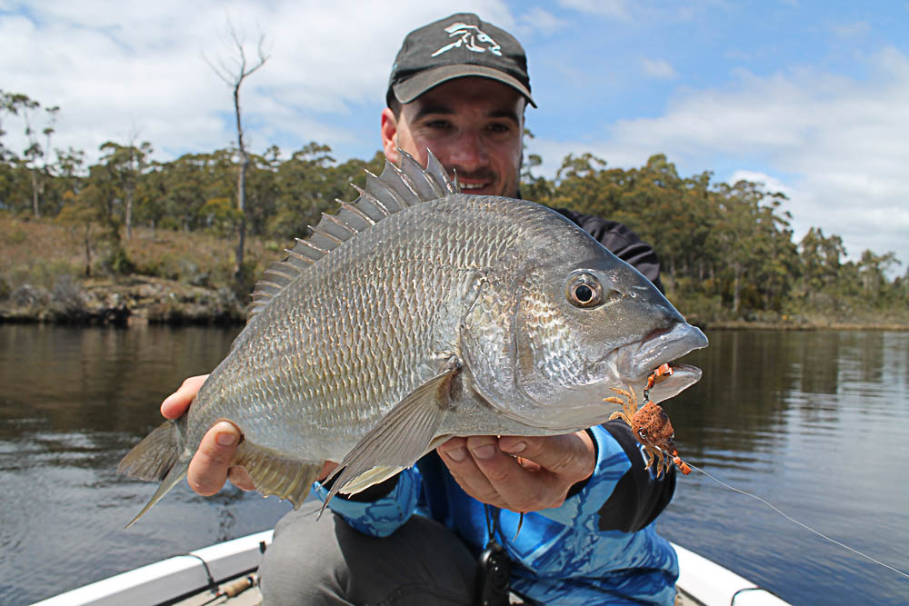 Andrew Cox of Cranka Lures holding a Black Bream caught in the Lune River, southern Tasmania with a Cranka crab lure