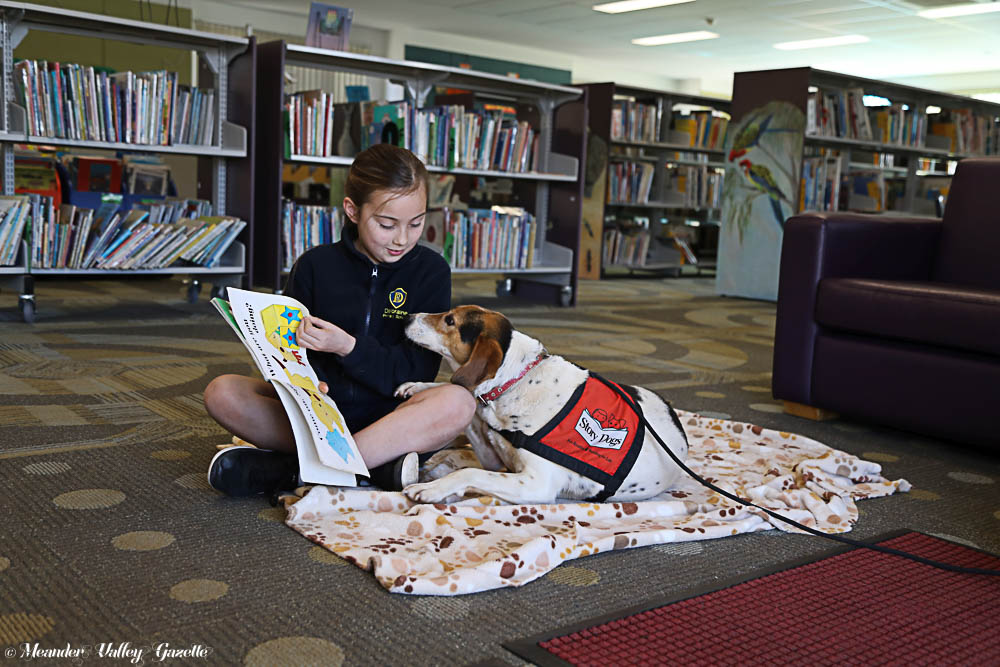 After a few sniffs and a wag of his tail, Bowza, a 6-year-old 'pound hound', settled on the mat next to his new friend Alyssa.