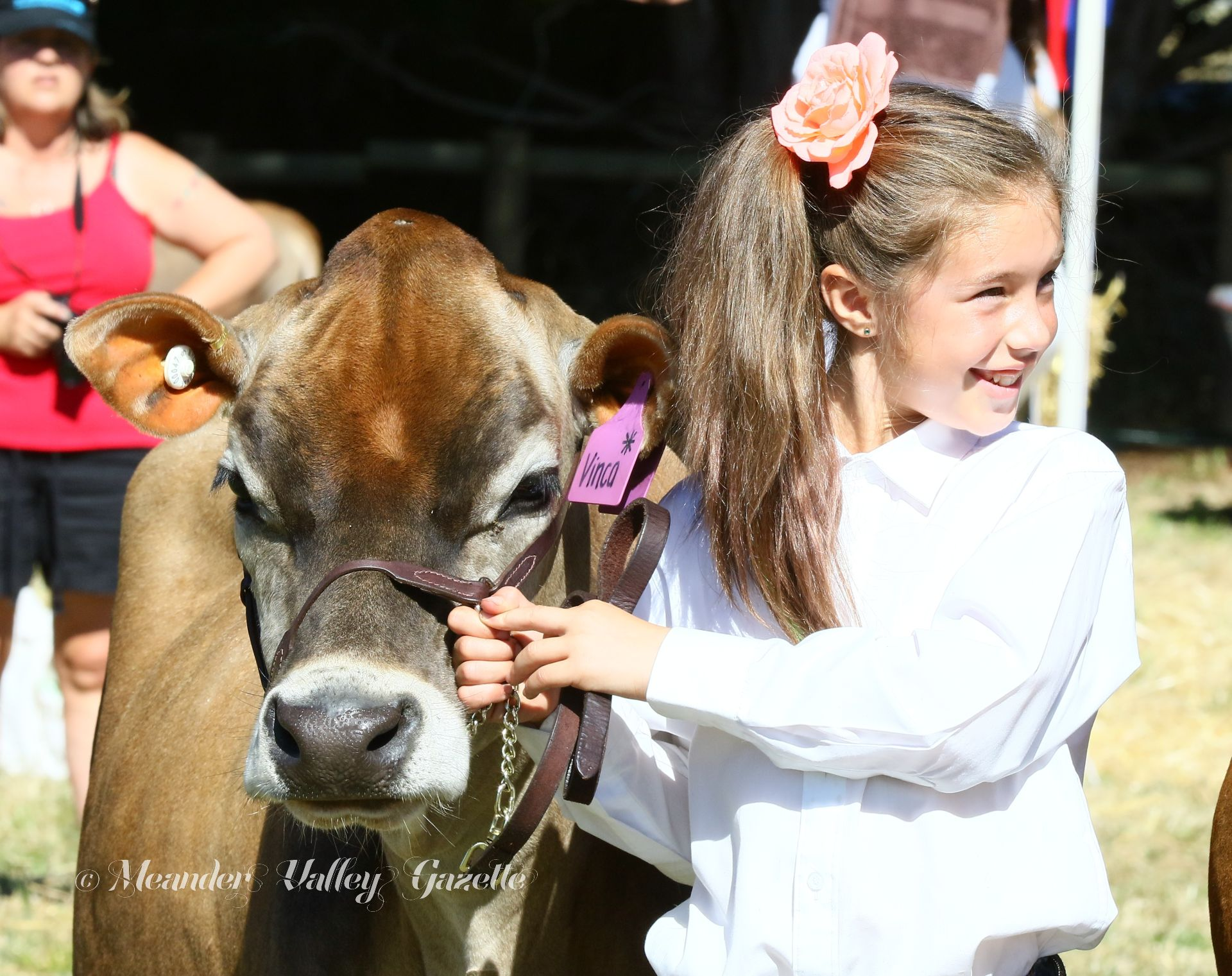 Junior cattle handling is a popular event at the Chudleigh Show