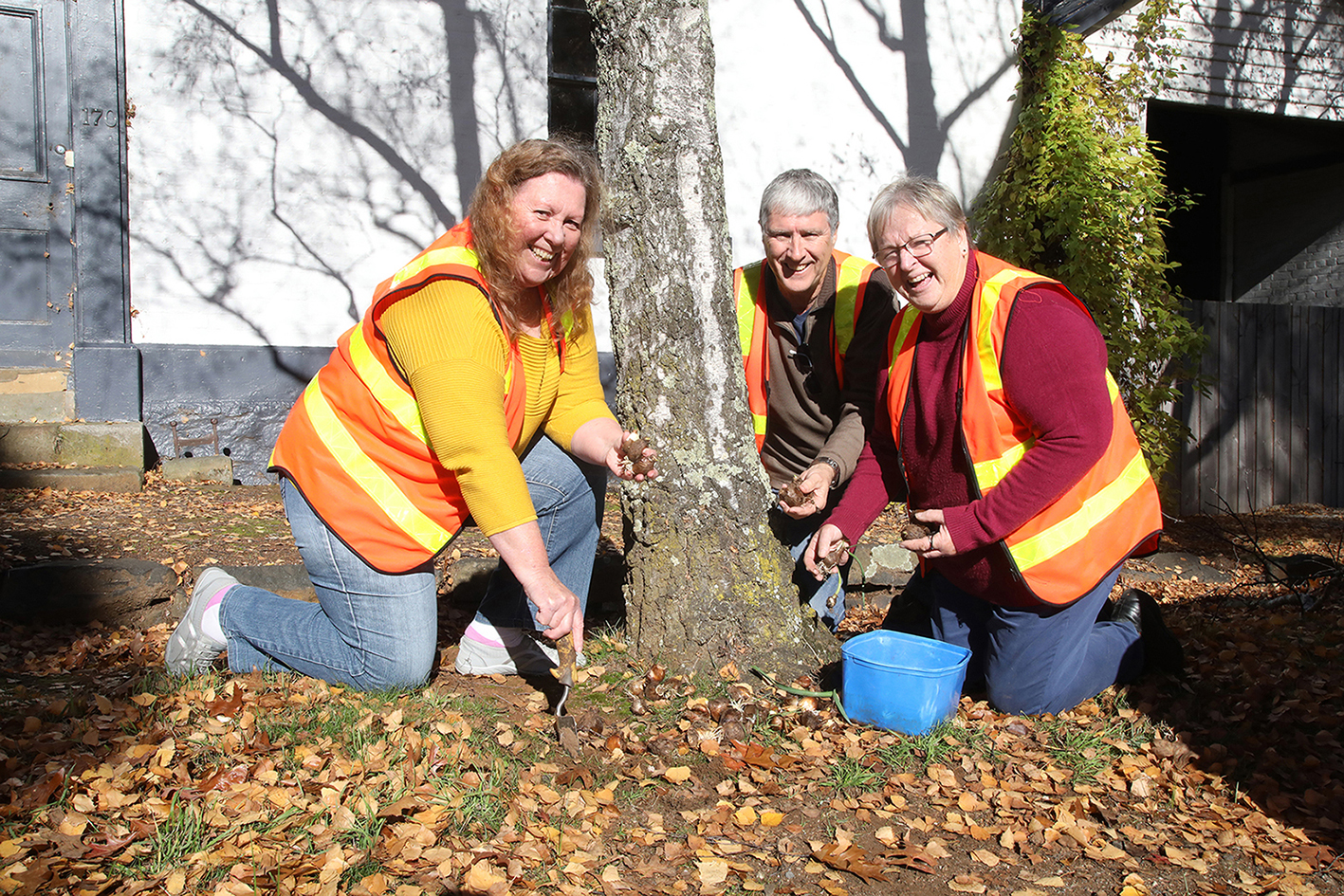 From left, Wendy and Roger Travis along with Helen Clarke, President of Westbury Garden Club, planting bulbs outside the White House in King Street, opposite the Village Green, Westbury.  Photo by Mike Moores