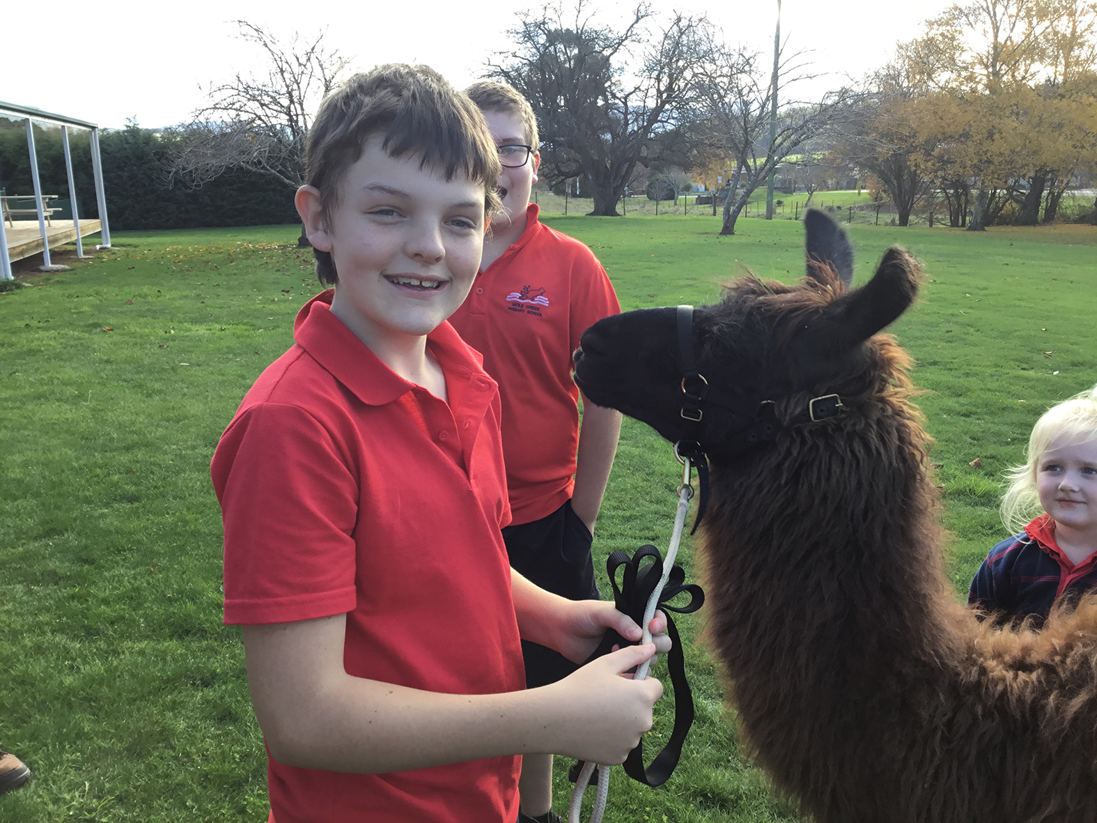Mole creek Primary School was visited by llamas to help celebrate National Simultaneous Storytime.  Photo supplied