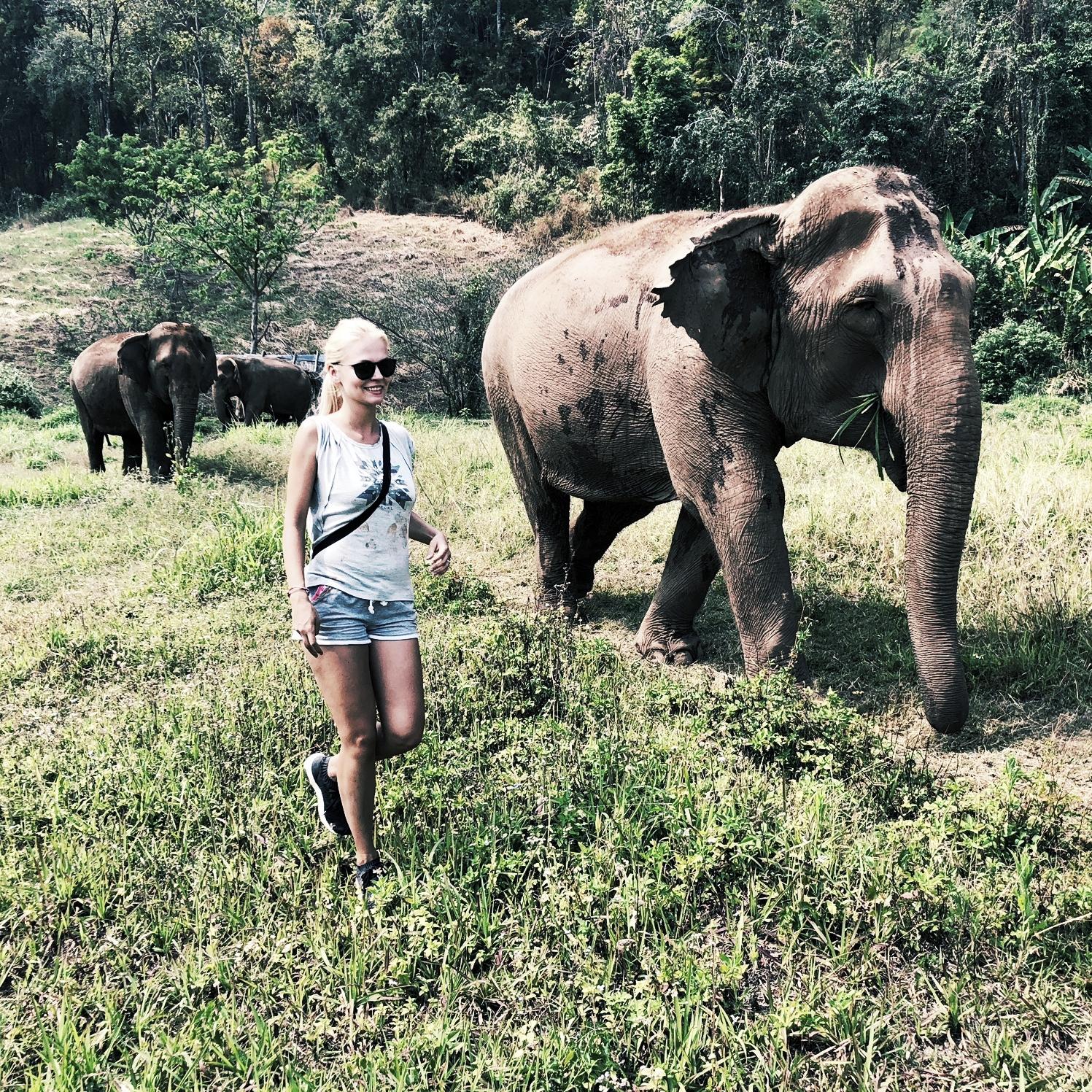 Vedle dalších organizací bojujících za ochranu slonů jsme zde, abychom šířili osvětu a zabránili zneužívání a úbytku slonů způsobených turistickým průmyslem.