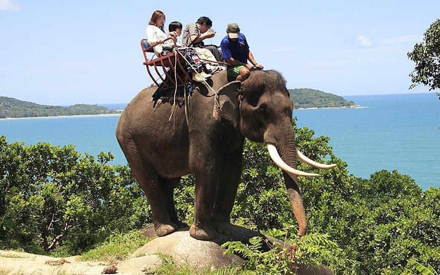 Projížďka na slonovi se pro turistu zdá být povinností.