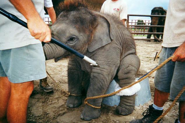 alg-baby-elephant-jpg.jpg