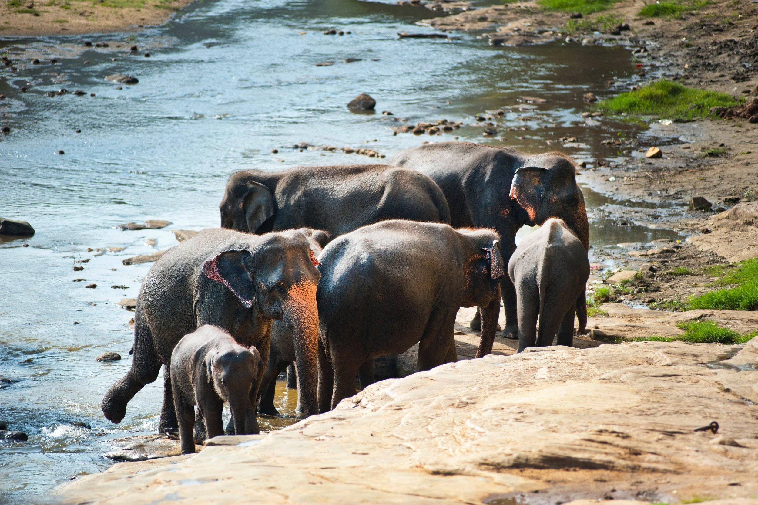 animals-baby-elephants-322482.jpg
