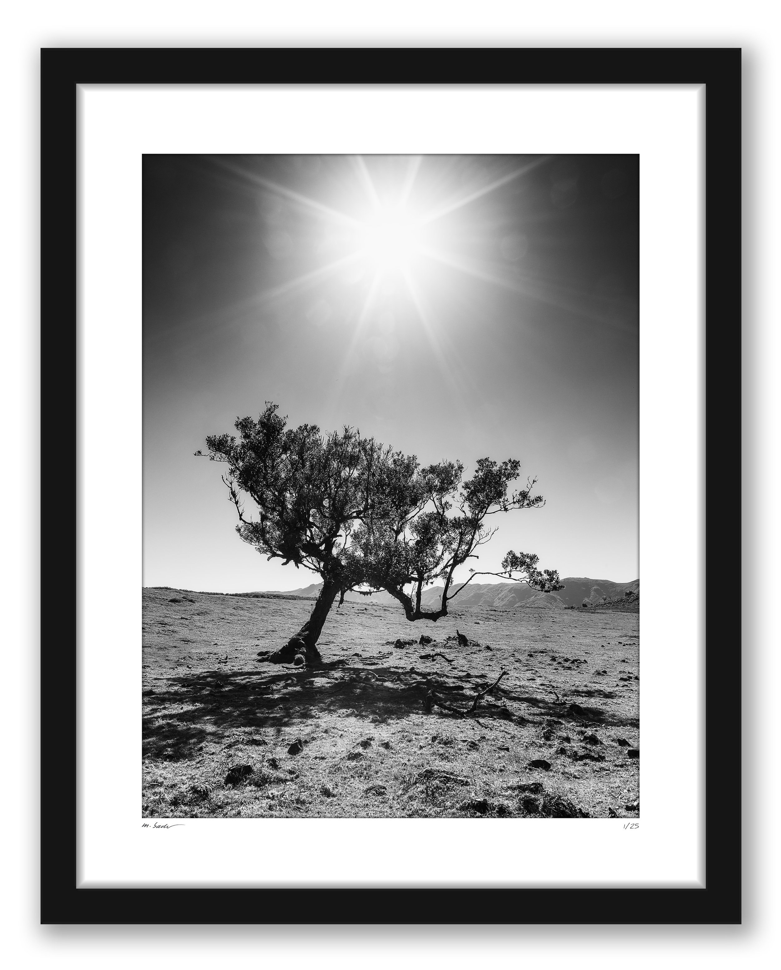 LIMITED-EDITION-MADEIRA-SOLITAIRE-TREE_Image.jpg