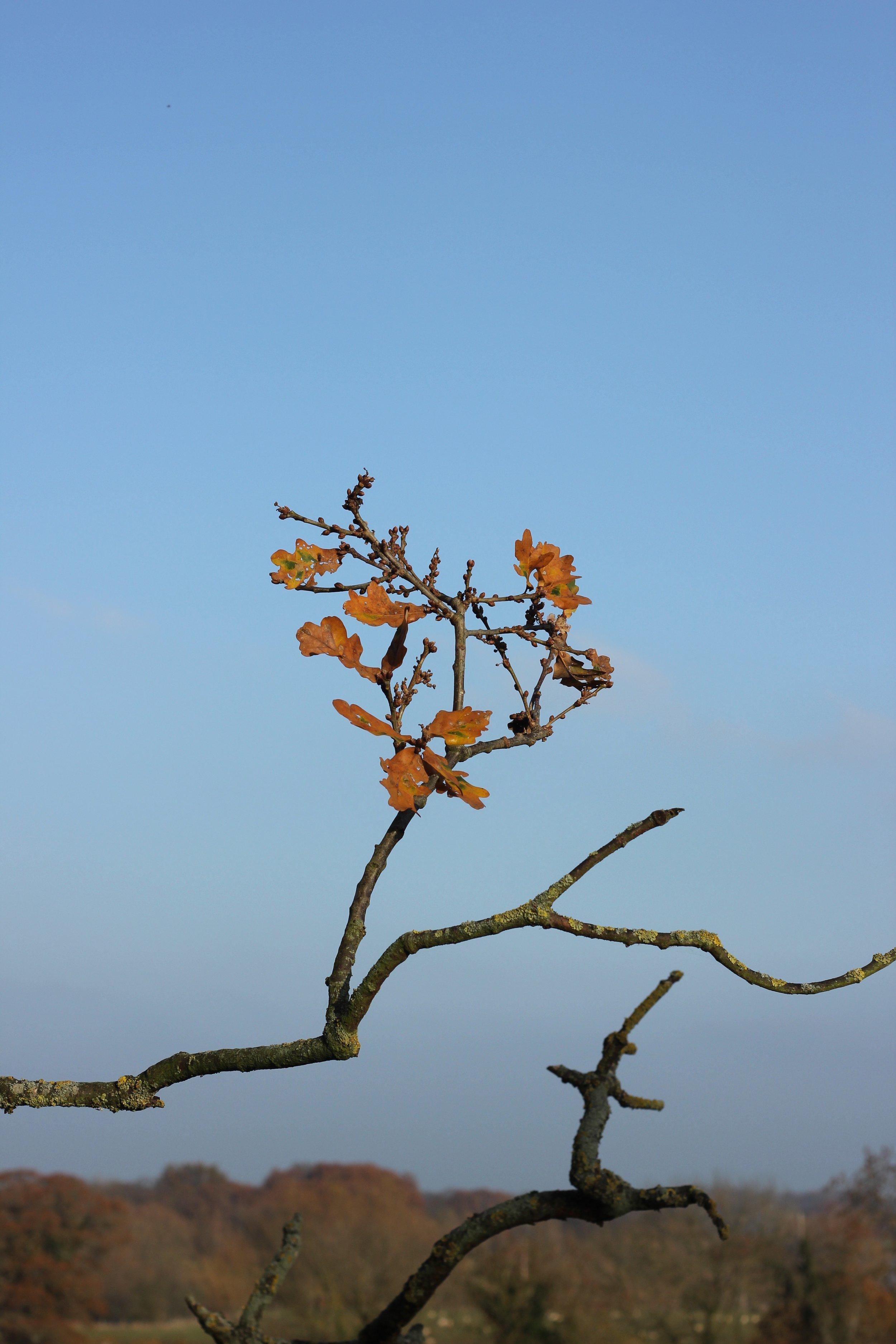 spaces trees create elizabeth cairns.jpg