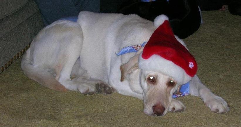 Mikey Christmas.jpg