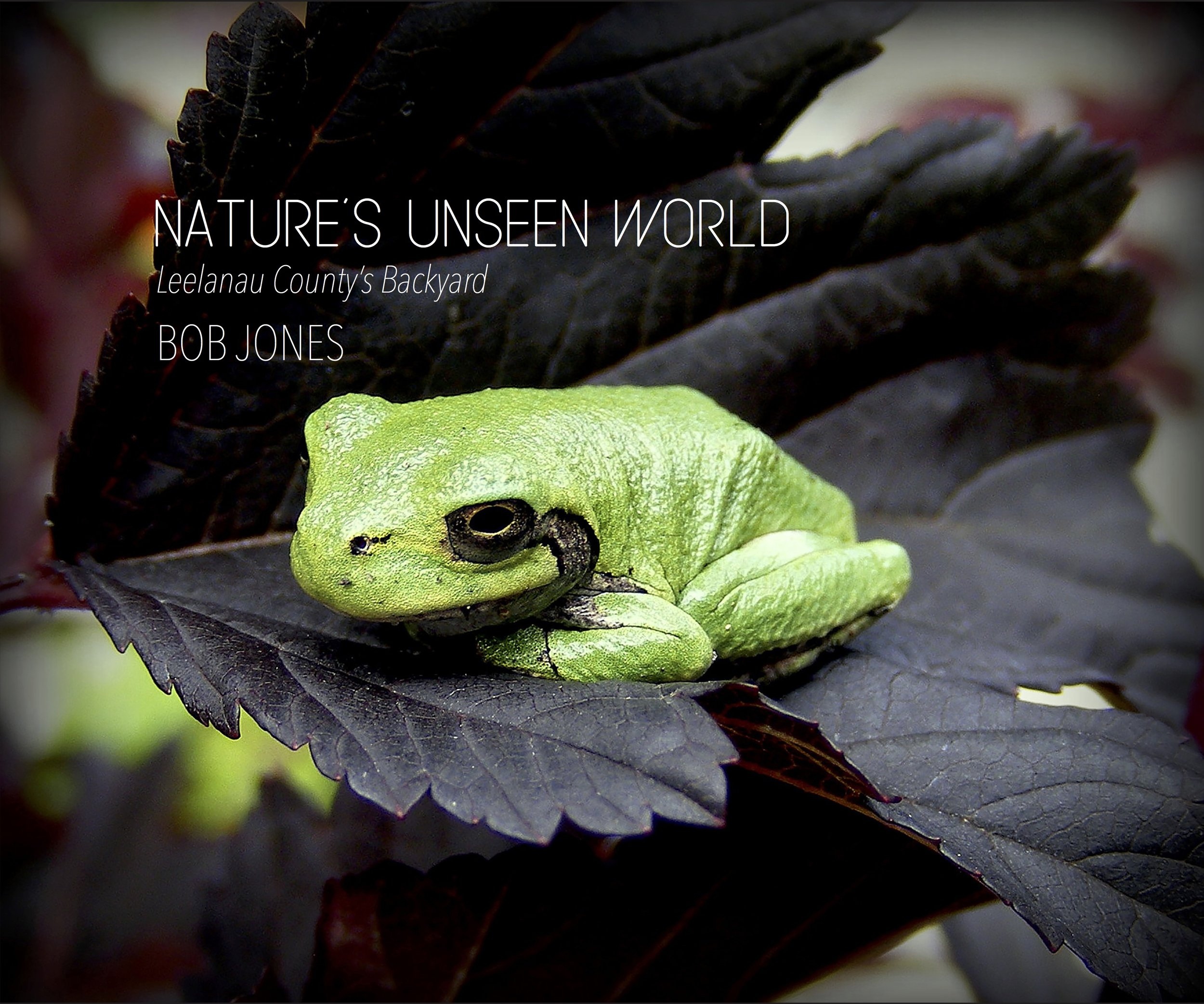 - I'm grateful to Bob Jones for giving all of us who revere the outdoors this intimate and inspiring window into our incredible natural world. For nature lovers, this book is not to be missed! —Thomas Nelson, Executive Director of the Leelanau ConservancyMore about the bookBuy the book on Amazon
