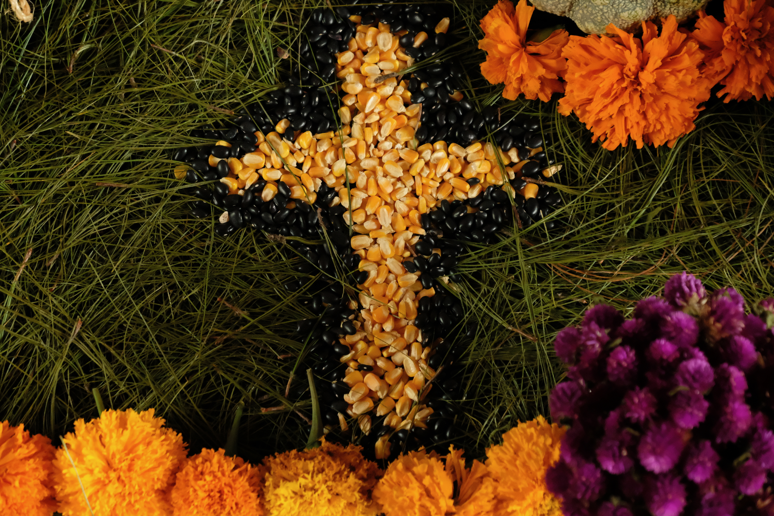 Day of the Dead altar with local pine needles, marigolds, corn and beans