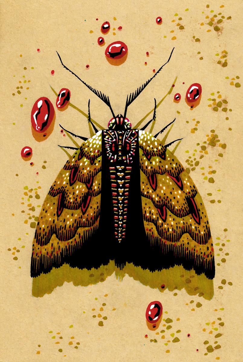 Vampire-Moth.jpg