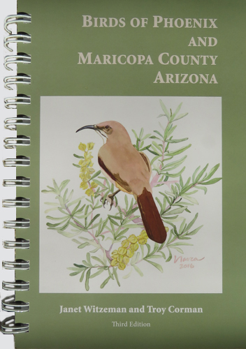 Birds of Phoenix, Birding in Arizona.jpg