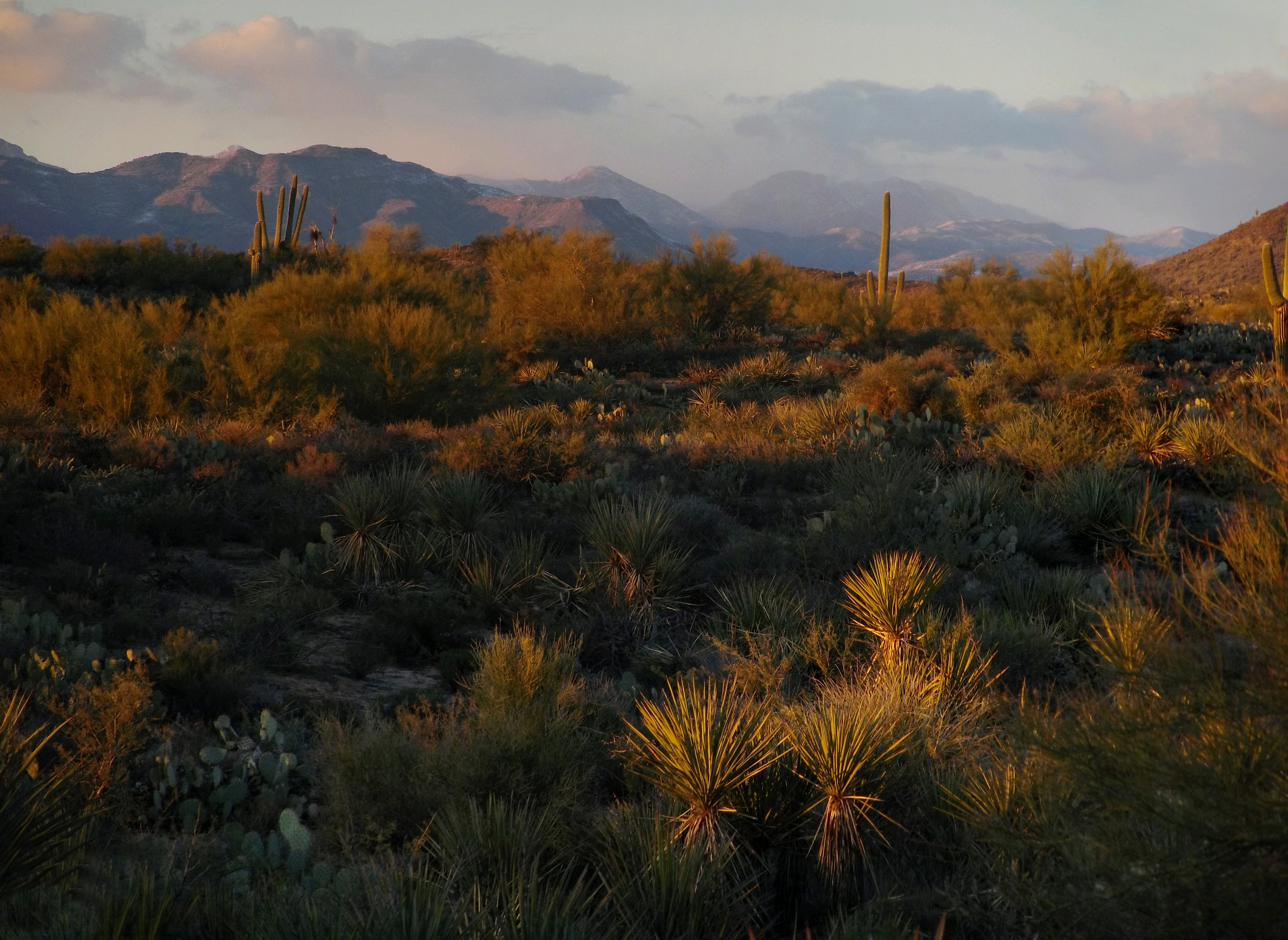 Our Beautiful Sonoran Desert