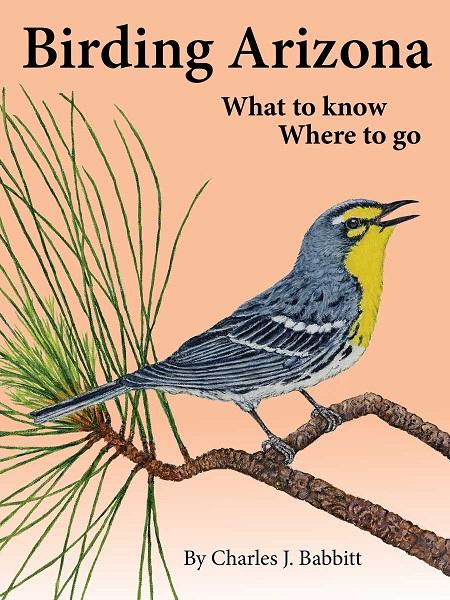 Birding Arizona, What to Know, Where to Go.jpg