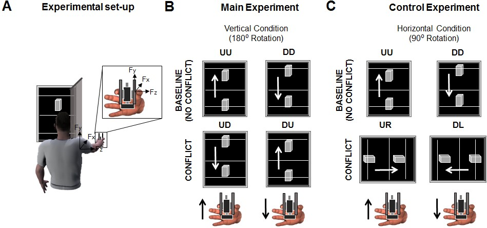 Figure 1.  Experimental set-up employed to quantify the role of vision of hand-held object movement for grip force control. From: Toma & Santello (2017).