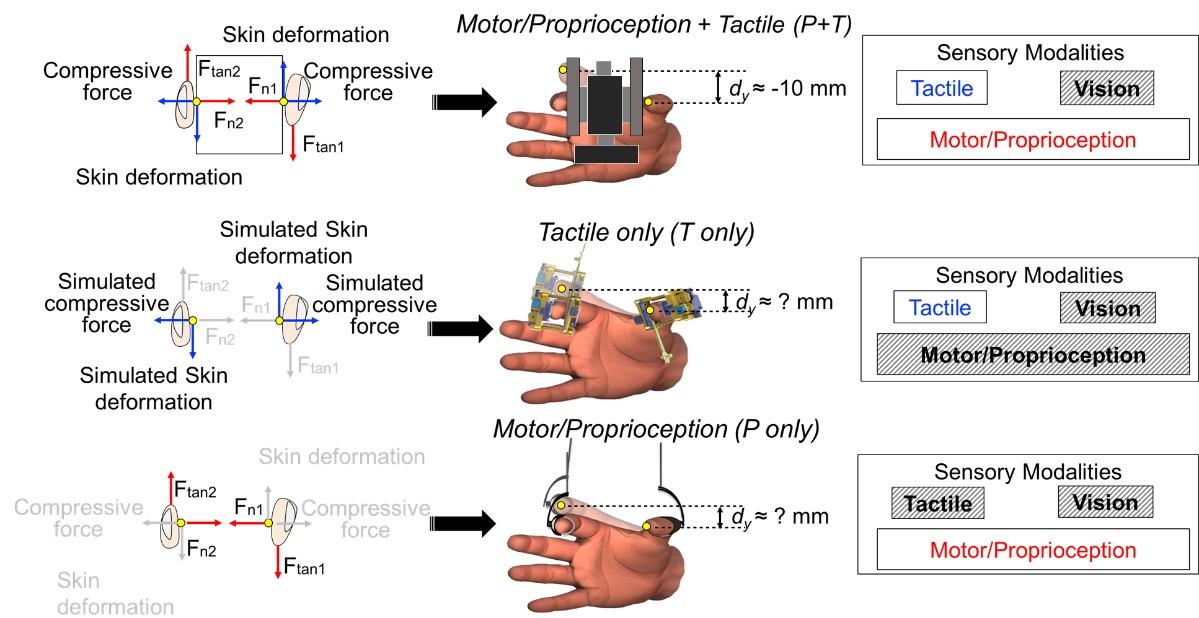 Figure 2.  Experimental design and set-up employed to quantify the contribution of tactile and non-tactile input of force for the estimation of finger relative position. From: Toma et al. (2019).