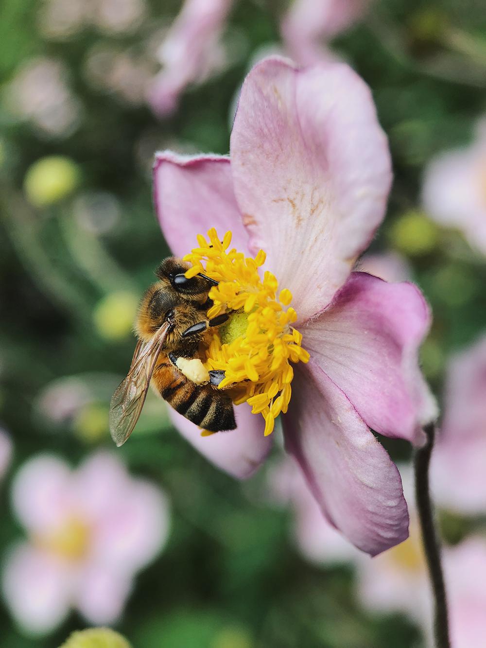 bee-anemone.jpg
