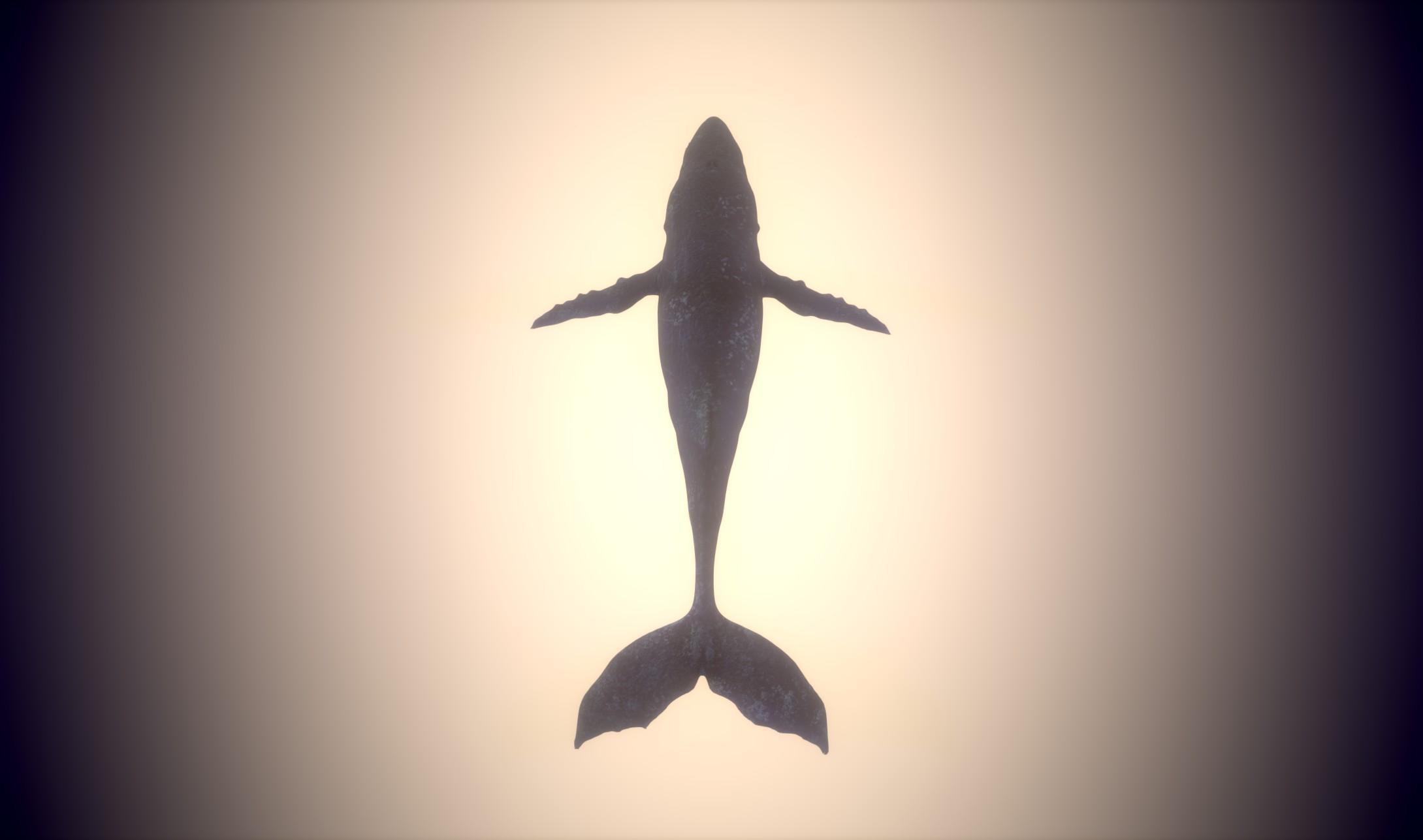 Still_Whale_Texture_05.jpg