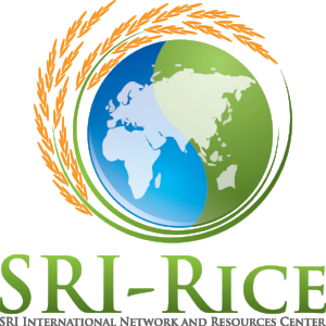 The SRI (System of Rice Intensification) International Network and Resources Center (SRI-Rice) is a program established at Cornell University in 2010 to advance the state of knowledge about SRI by encouraging scientific research, and to make such knowledge available to as many farmers around the world as possible. Cornell faculty, staff and students working with civil-society, government and private-sector partners around the world have been the most visible and active catalysts for SRI dissemination over the past 20 years. This is a joint application with Pragati Koraput, a natural resources management organization that promotes SRI with the tribal farmers of Koraput District in India.
