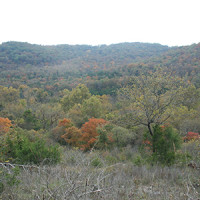 busiek_state_forest_thumb-200x200.jpg