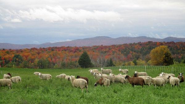 Bonnieview-Farm.jpg
