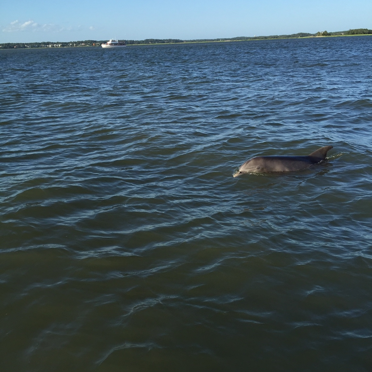 It is quite common to have dolphins join your charter tour on the ride out.