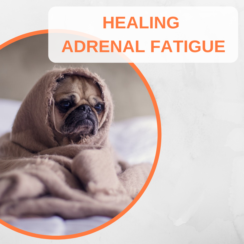 HEALING ADRENAL FATIGUE.png