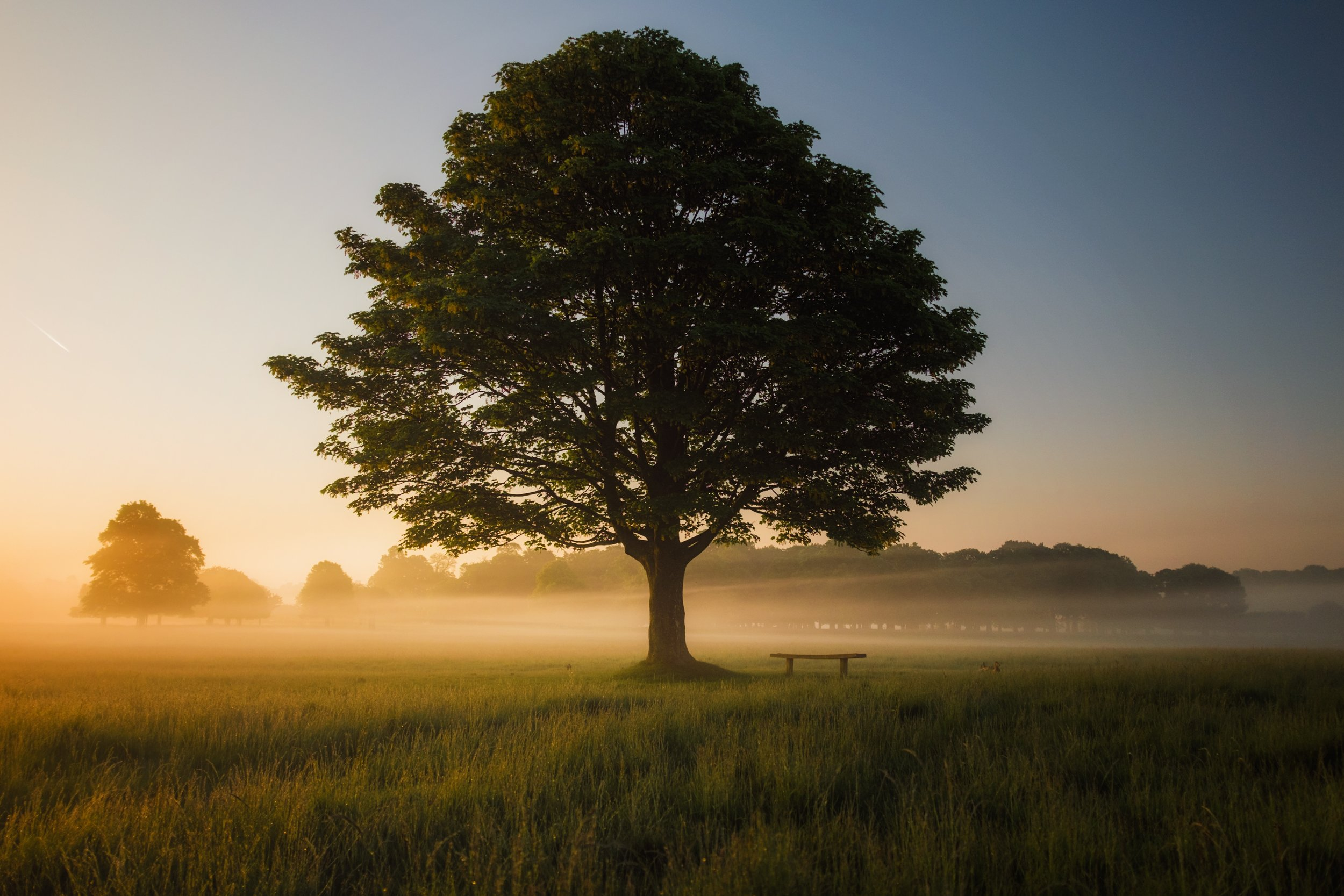 Mindful Living CBT Tree.jpg