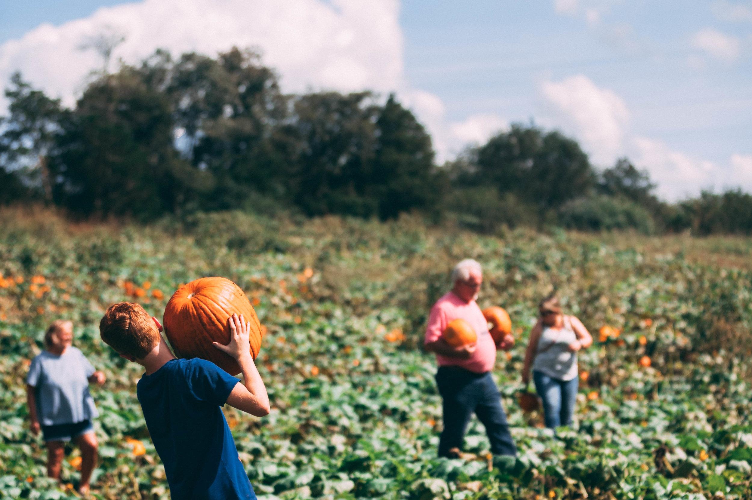 plenty o' pumpkins    groups
