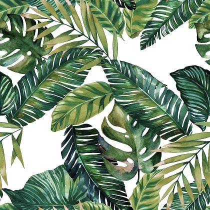 ecosystem palm.jpg