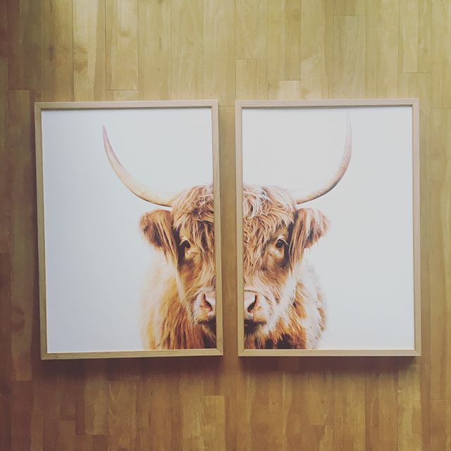 Cows in oak . It's what the cool kids do.  #homedecor  #wallart  #printmaking  #customframing  #byronbay  #pampa  #interiordesign  #gicleeprints  @wearepampa @cansoninfinity @eizo_apac