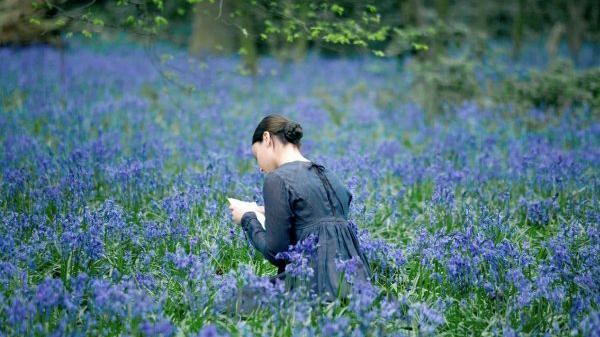 Bluebell pic.jpg