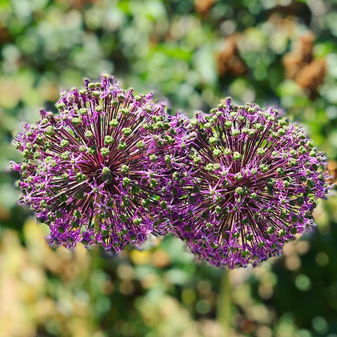 The Beauty of Filoli: Flowers