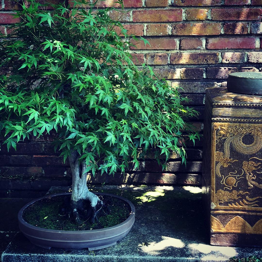 The Beauty of Filoli: Bonsai Garden