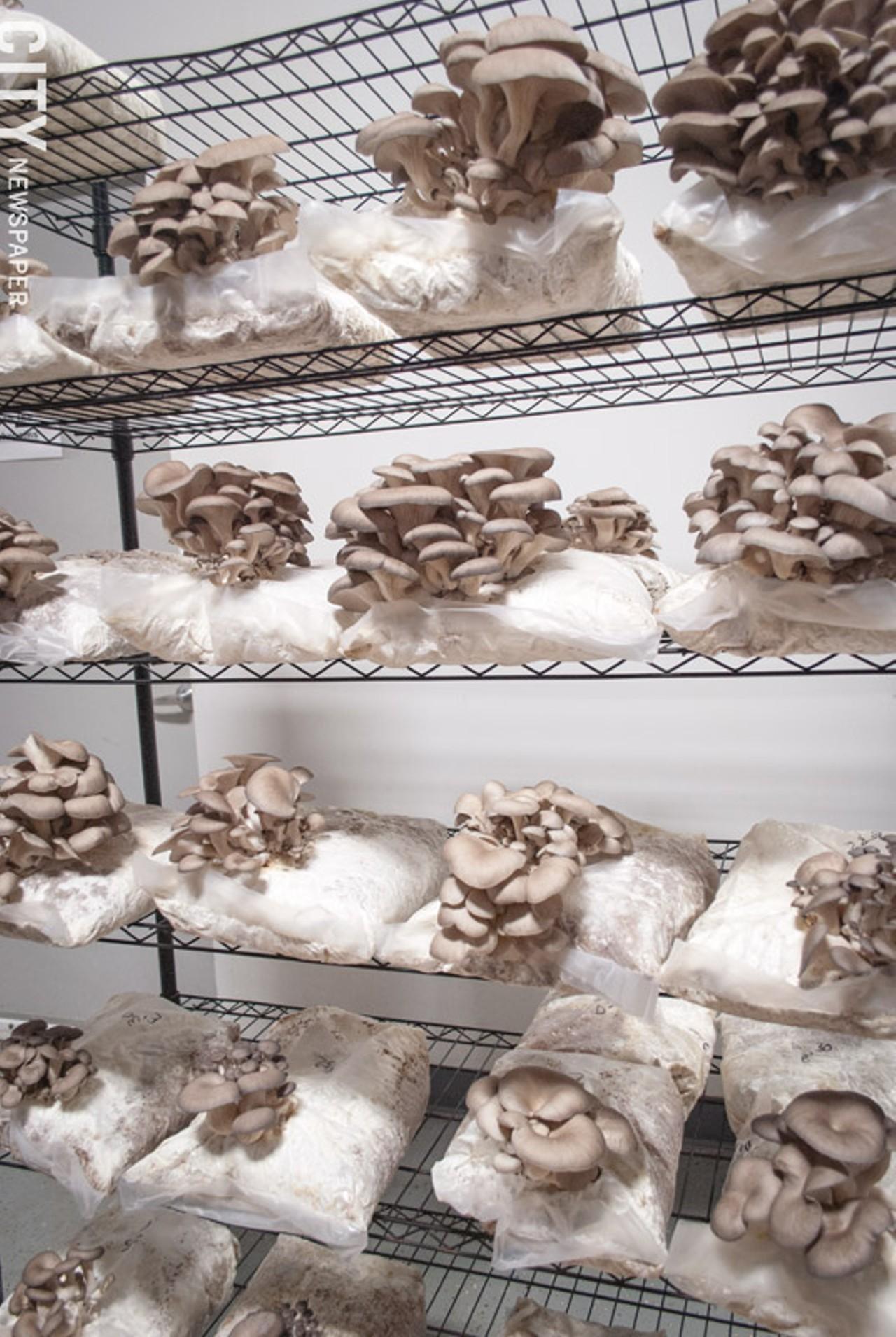 mushrooms-growing.jpg