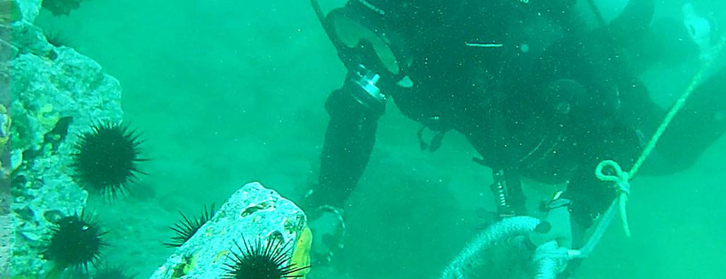 ウニを採獲するダイバー