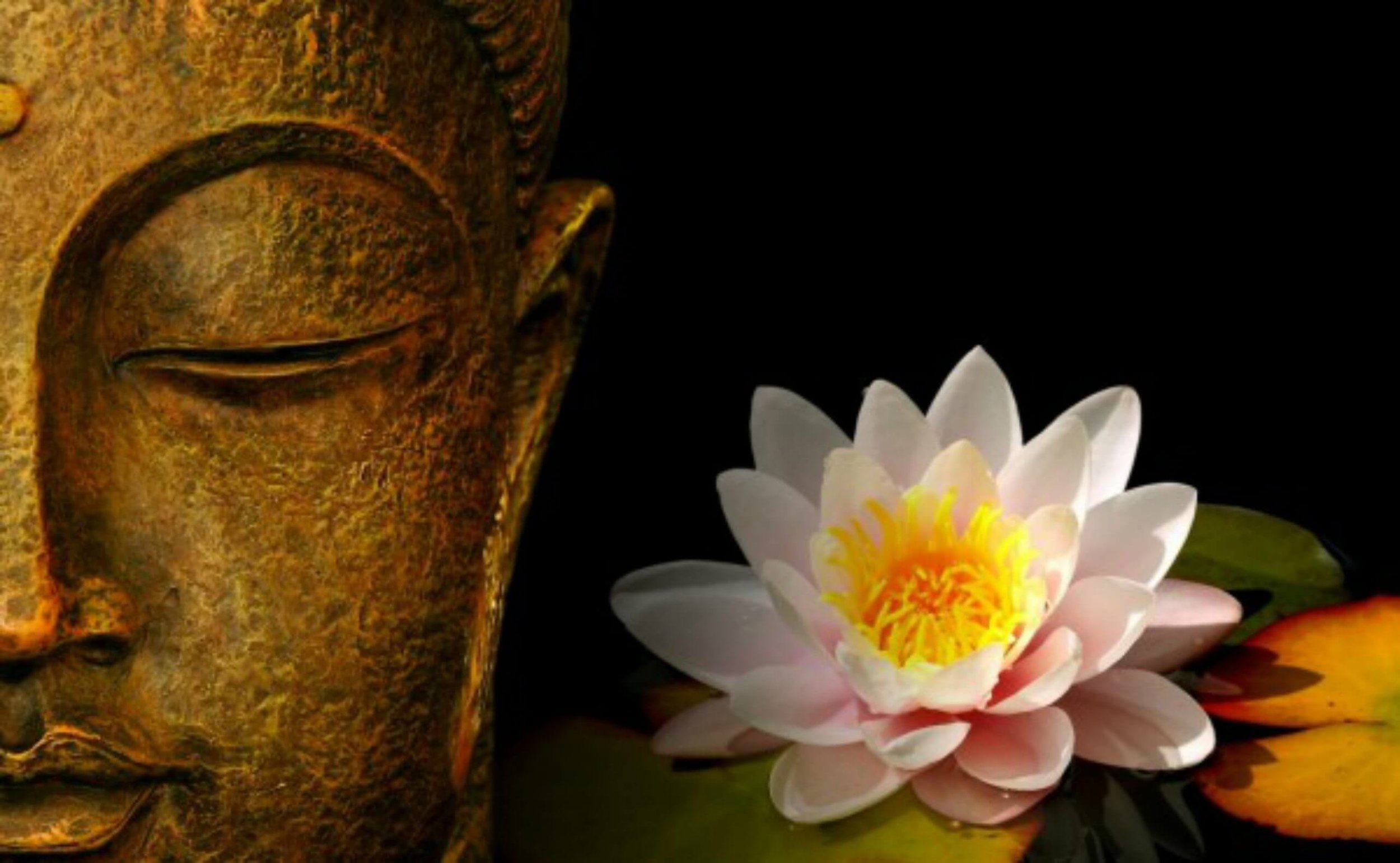 cropped-Buddha-wallpaper-big-1.jpg