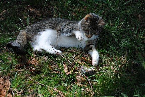 cat-2836936__340.jpg