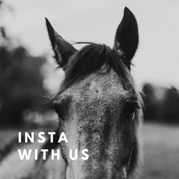 HOMEPAGE_ INSTA WITH US.png